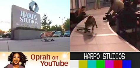 Tyson the skateboarding bulldog on Oprah